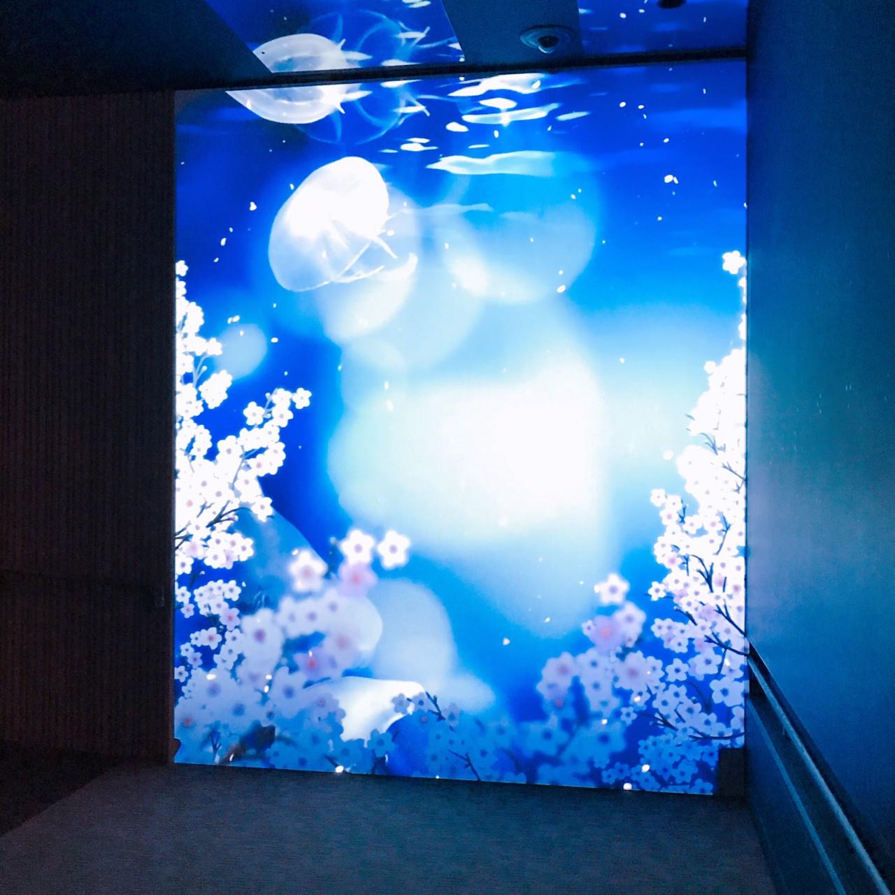 #ThisisCHOCO 【002】春を感じるインタラクティブアート「桜とクラゲ」で癒やしの休日を #nylonjp