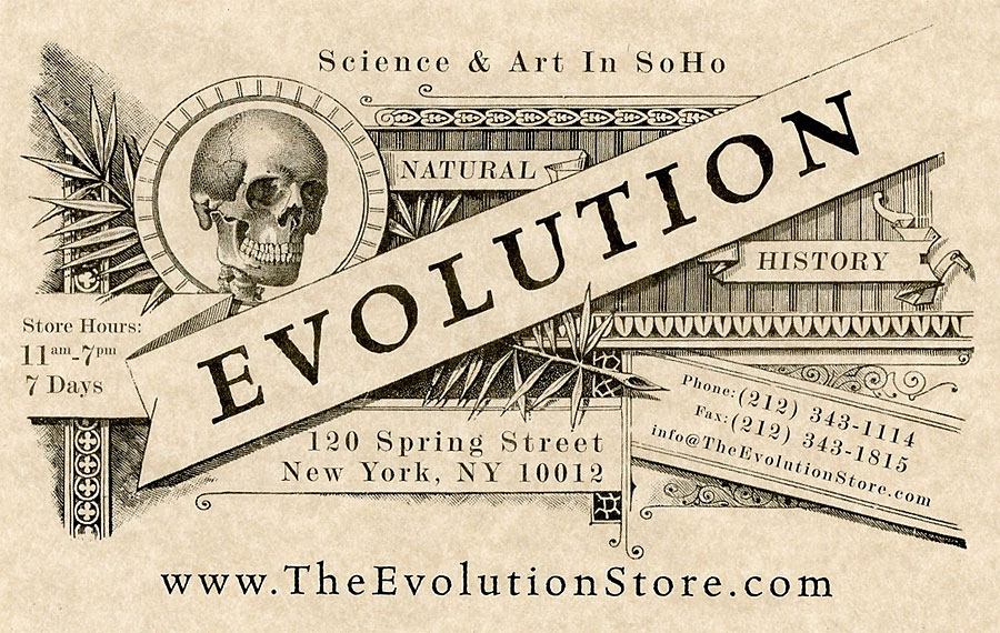NYCおすすめSHOPマニアック編。剥製や人骨まで買える【The Evolution Store】
