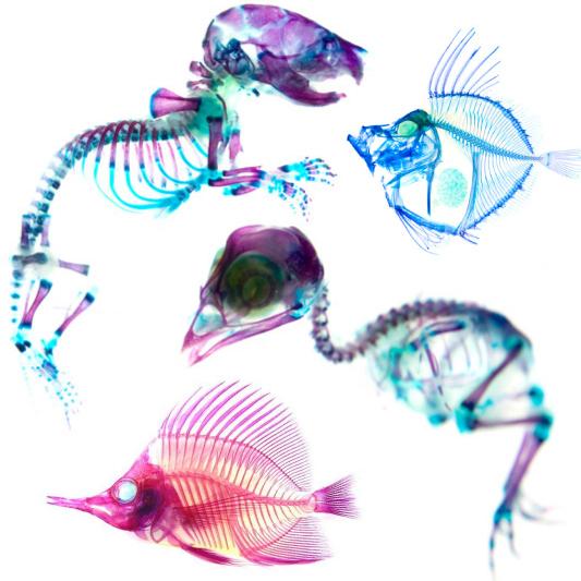 100524_15_transparent-specimen
