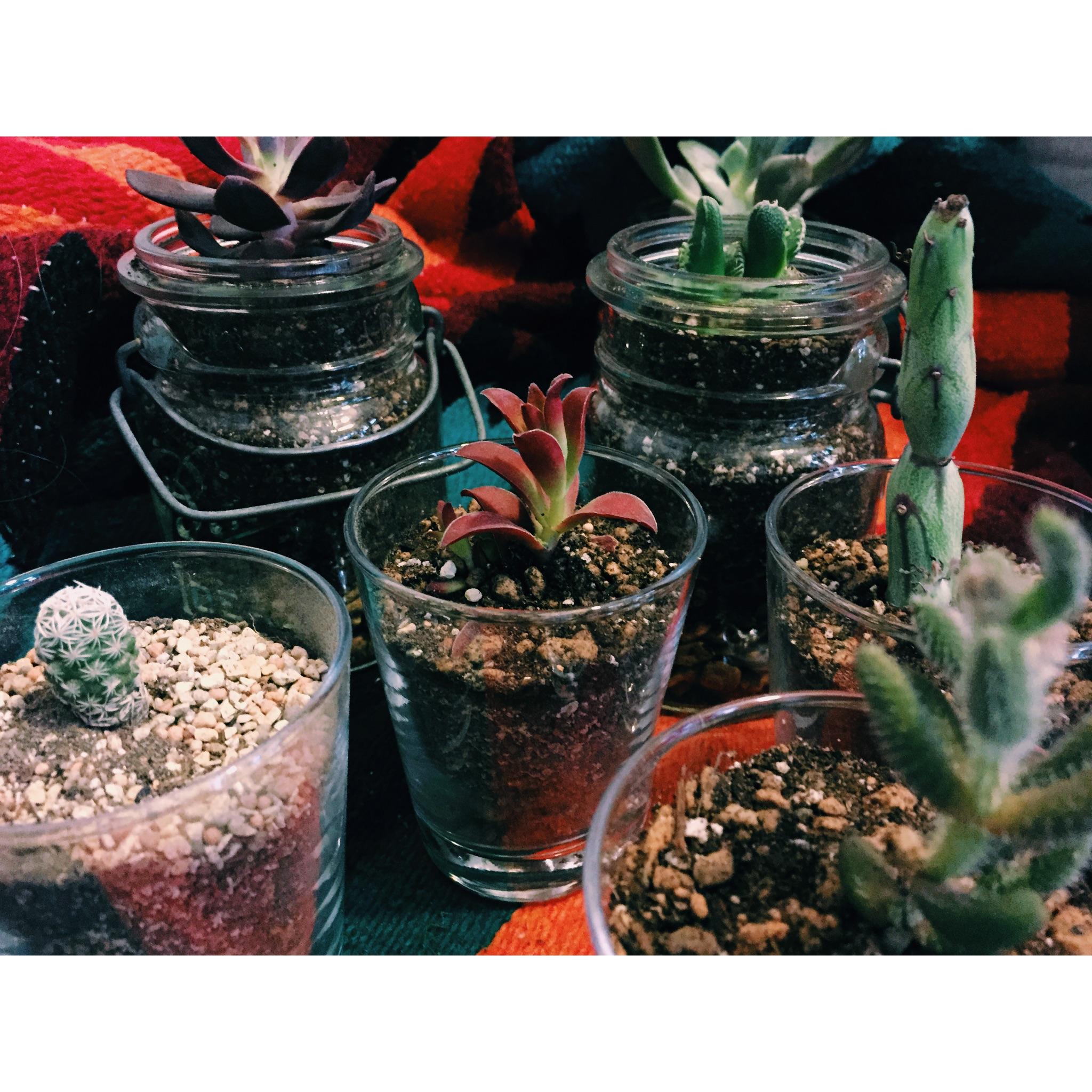 【植物と共に生活を!とってもキュートな多肉植物の植え替え手順は?枯らさないように育てる方法】
