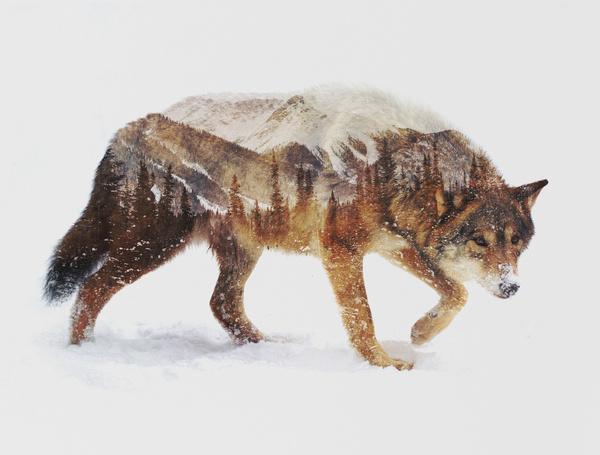 自然豊かな生息地を感じる動物アート #ANDREAS LIE