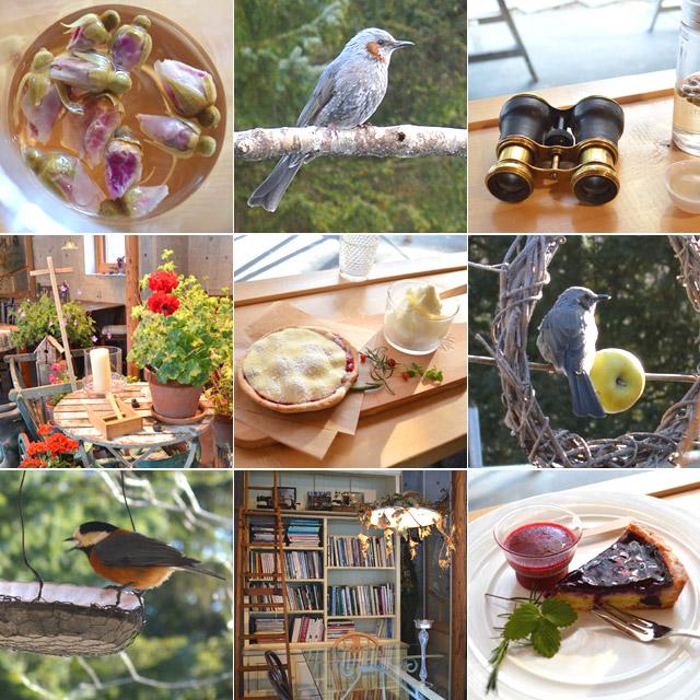 沢山の野鳥に出会える♪日常の喧騒から離れた北海道自然カフェ #hokkaido #cafe #bird