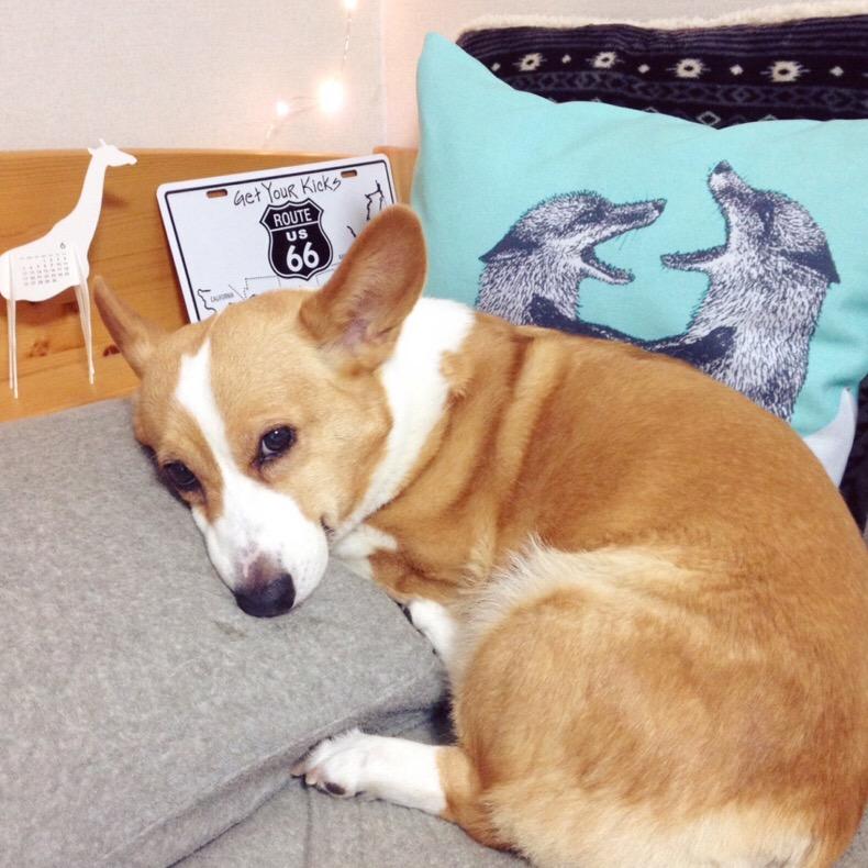 犬とわたし。#dogs #僕のワンダフルライフ