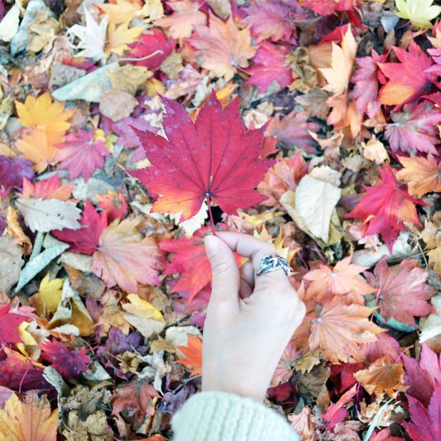 紅葉を楽しもう。札幌の隠れた紅葉名所 #紅葉 #autumn