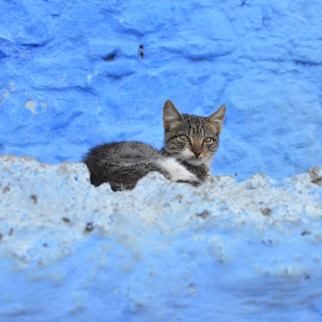 ブルーと、猫と、階段。様々な表情がある青い街シャフシャウエンvol.2 #放浪 #アフリカ #モロッコ #chefchaouen