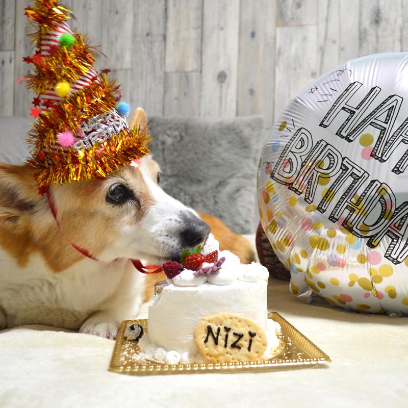 大切な愛犬のお祝いに本格ケーキをお探しなら。札幌でおすすめの犬用ケーキ #北海道