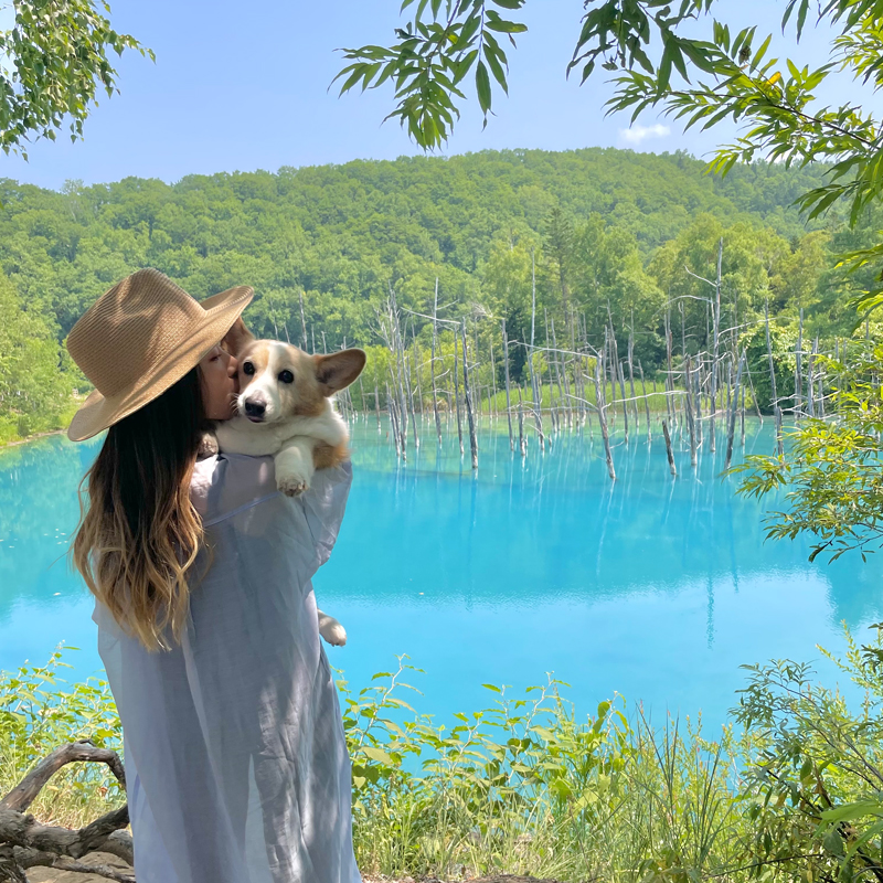 愛犬と楽しむ北海道の青い絶景 #青い池 #美瑛 #北海道