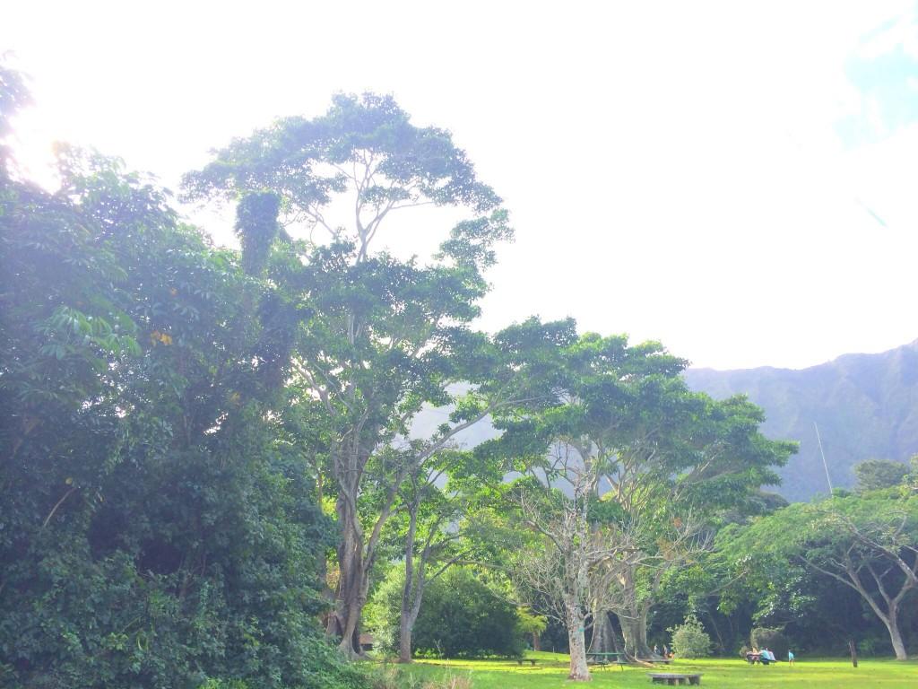 人とは違う体験をしたければ、絶景が楽しめる #HAWAII のこの2カ所をおさえるべし。 #MotherNature