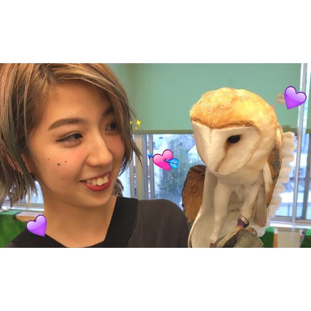 生まれて初めて「ふくろうカフェ」に行ってきた!とにかく癒されますメロメロです。 #harajuku #owls