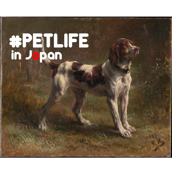 「命を買う」という事。 ー未だに、値段をつけられショーケースに入れられた動物達がいる日本。 #PETSHOP #ANIMALS