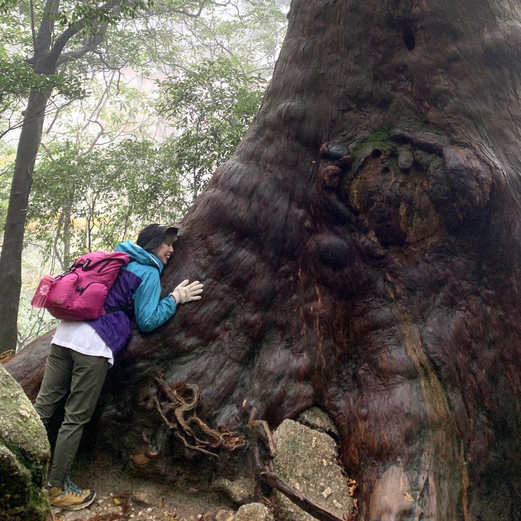 樹齢7200年ともいわれる #縄文杉 を拝みに、往復10時間超えのトレッキングをしたら想像超えの感動が待っていた。 #屋久島