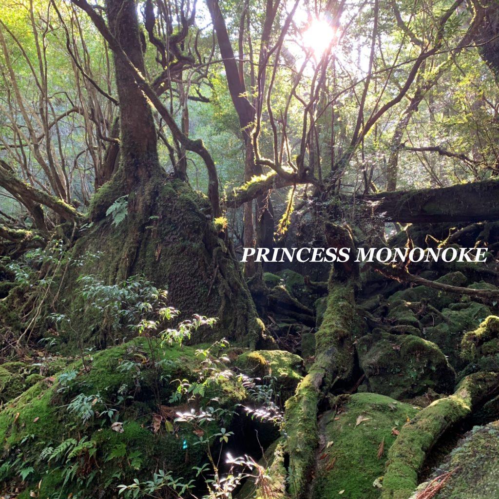 生涯忘れない絶景。 #もののけ姫 の舞台「白谷雲水峡」に実際に行ってみた! #屋久島 #ジブリ