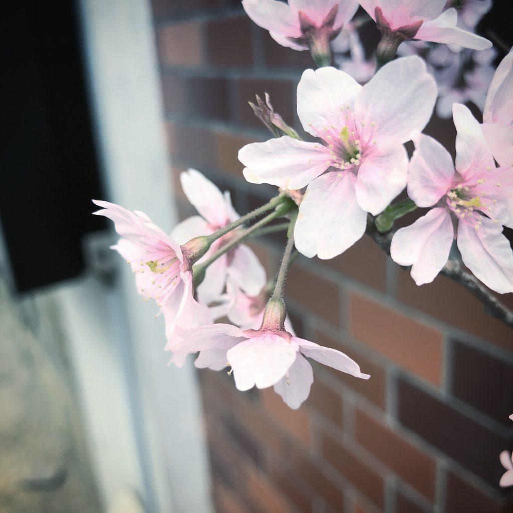 みんなと同じはイヤ!あか抜ける春メイクは○○○カラーで決まり‼️#カラーメイク #MURUA #春ネイル