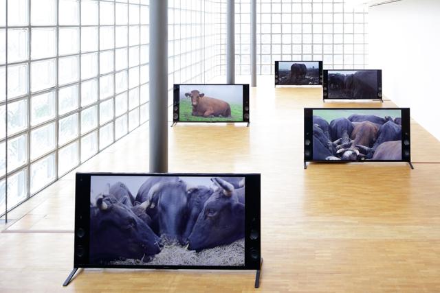 「境界」高山 明+小泉明郎展